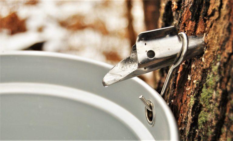 樹液の流れの現象